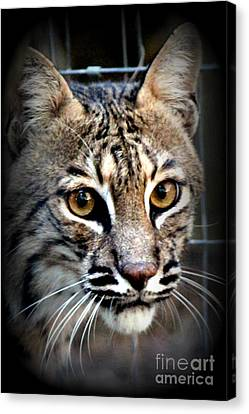 Cat Fever Canvas Print by Kathy  White