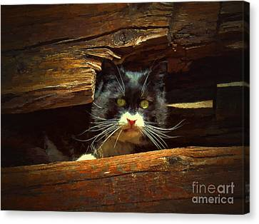 Feline Canvas Print - Cat Hiding by Jerry L Barrett