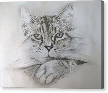 Cat I. Canvas Print by Paula Steffensen