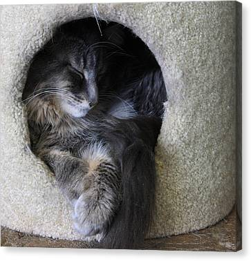Cat In A Hole Canvas Print