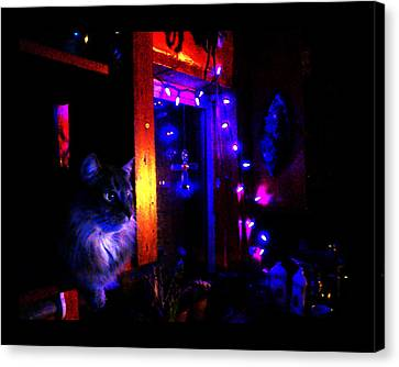 Canvas Print featuring the photograph Cat In The Night Kitchen by Susanne Still