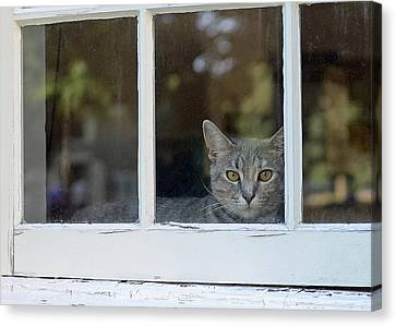 Cat In The Window Canvas Print by Lisa Phillips