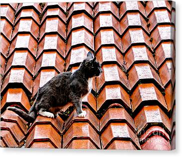 Cat On A Hot Tile Roof Canvas Print