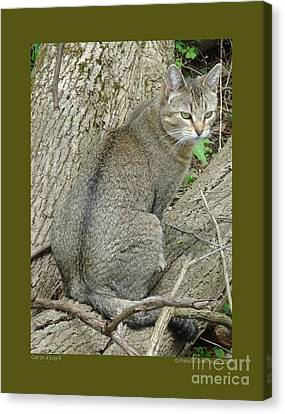 Cat On A Log-ii Canvas Print by Patricia Overmoyer