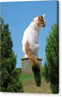 Canvas Print featuring the photograph Cat On Pedestal by Bonnie Muir