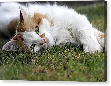 Canvas Print featuring the photograph Cat On The Grass by Raffaella Lunelli