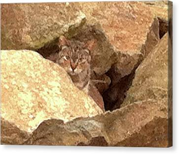 Cat On The Rocks Canvas Print
