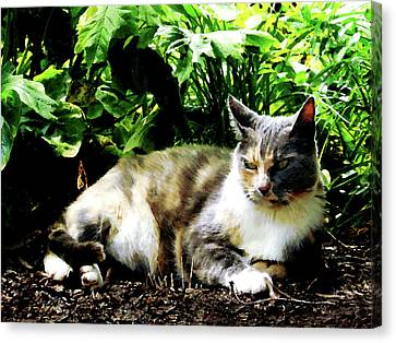 Cat Relaxing In Garden Canvas Print by Susan Savad