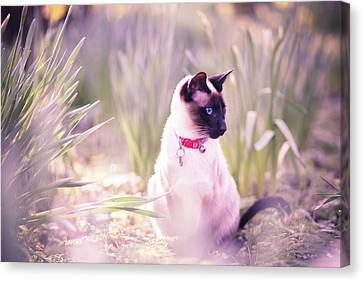 Cat Sitting By Daffodils Canvas Print by Sasha Bell