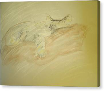 Cat Sketch Canvas Print