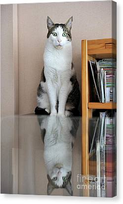 Cat Standing On Chair Canvas Print by Sami Sarkis