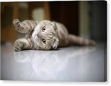 Cat Stretching Canvas Print