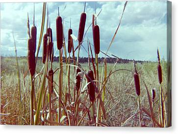 Canvas Print featuring the photograph Cat Tails by Bonfire Photography