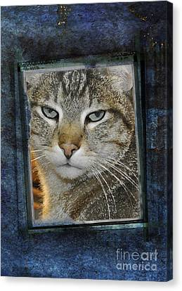 Cat Through A Tiny Window Canvas Print by Mary Machare