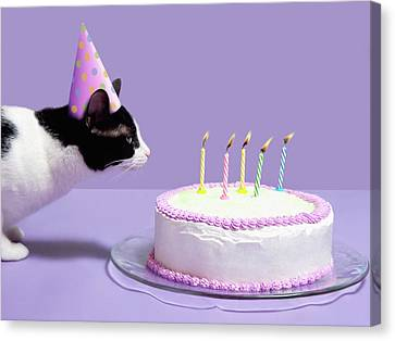 Cat Wearing Birthday Hat Blowing Out Candles On Birthday Cake Canvas Print by Steven Puetzer