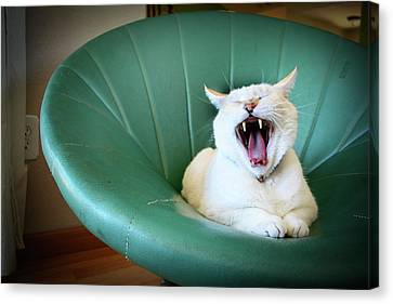 Cat Yawning In A Vintage Blue Green Chair Canvas Print by Carrie Anne Castillo