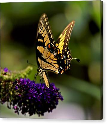 Canvas Print featuring the photograph Catch Me If You Can by J Cheyenne Howell