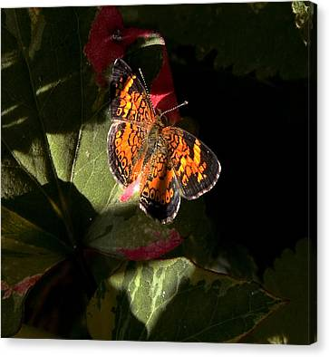 Canvas Print featuring the photograph Catching Rays by Michael Friedman