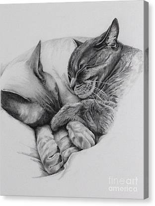 Catching Some Shuteye Canvas Print by Margit Sampogna