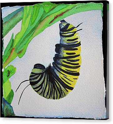 Canvas Print featuring the painting Caterpillar by Teresa Beyer