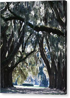 Cathedral Ford Plantation Canvas Print by Mary Sparrow