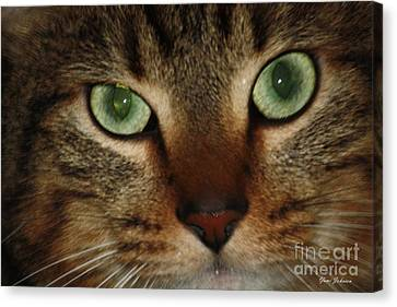 Canvas Print featuring the photograph Cat's Eye by Yumi Johnson