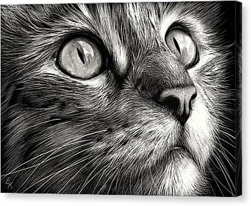 Cat's Face Canvas Print by Elena Kolotusha