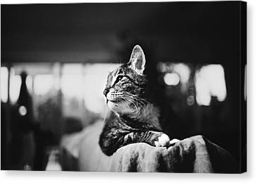 Cats Portrait Canvas Print by Sumit Mehndiratta