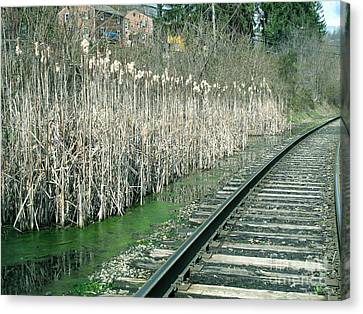 Cattails By The Tracks Canvas Print by Sandy McIntire