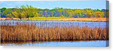 Canvas Print featuring the photograph Cattails by Joe Urbz