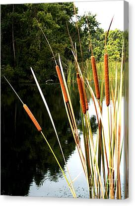 Cattails On The River Bank Canvas Print