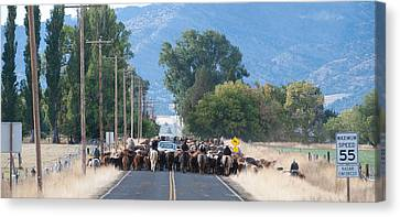 Cattle Drive 2 Canvas Print by Gary Rose