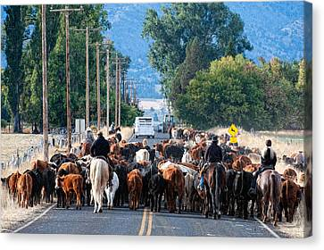 Cattle Drive Canvas Print by Gary Rose