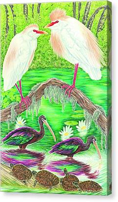 Cattle Egrets With Ibis Canvas Print by Tim McCarthy