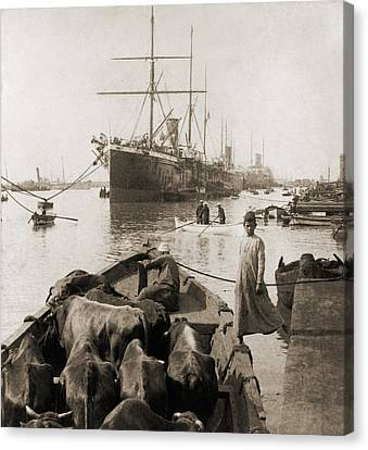 Cattle In A Small Boat Destined Canvas Print by Everett