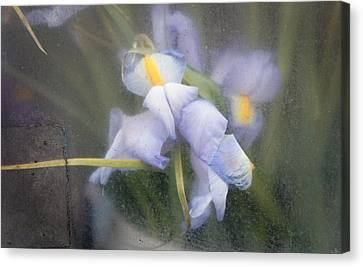 Caught And Waiting Canvas Print by Lynn Wohlers