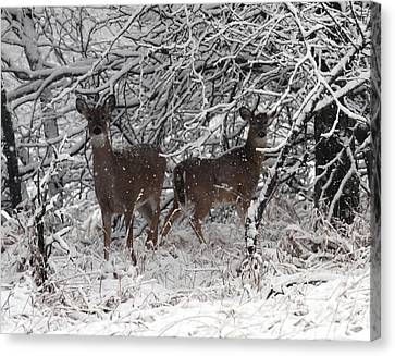 Canvas Print featuring the photograph Caught In The Snow Storm by Elizabeth Winter