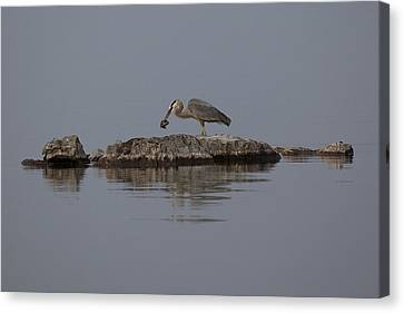 Canvas Print featuring the photograph Caught One by Eunice Gibb