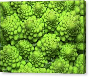 Cauliflower Fractals Canvas Print by Mark Watson (kalimistuk)