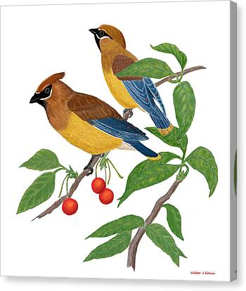 Cedar Waxwing Canvas Print by Walter Colvin
