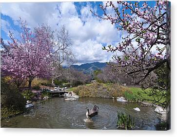 Celebrating Spring Canvas Print by Mike Herdering