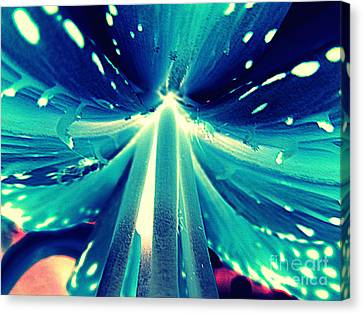 Celestial Radiance Canvas Print by Renee Trenholm