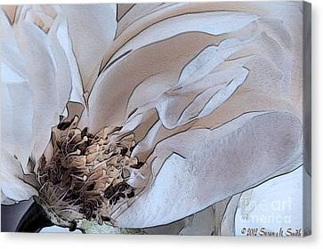 Centerfold Canvas Print by Susan Smith