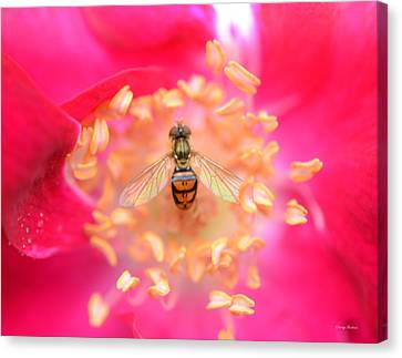 Canvas Print featuring the photograph Centerpiece Bee In A Rose by George Bostian