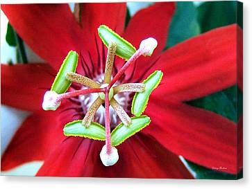 Canvas Print featuring the photograph Centerpiece  Passion Flower 001 by George Bostian