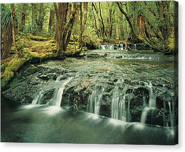 Cephissus Falls In Cradle Mountain-lake St Clair National Park, World Heritage Area, Tasmania, Australia Canvas Print by Peter Walton Photography