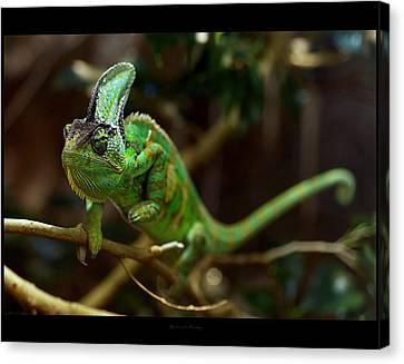 Chameleon Canvas Print by 1d110
