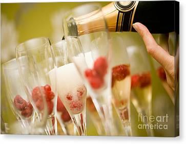 Champagne Canvas Print by Kati Molin