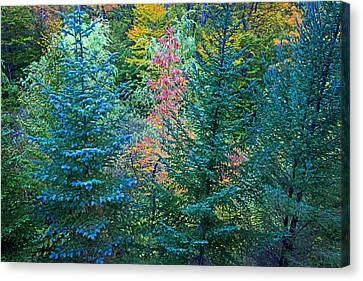 Changing Colors Canvas Print