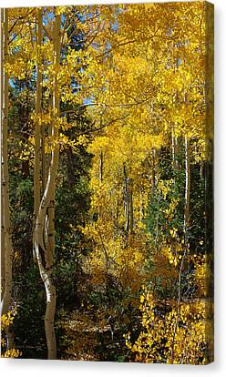 Canvas Print featuring the photograph Changing Seasons by Vicki Pelham
